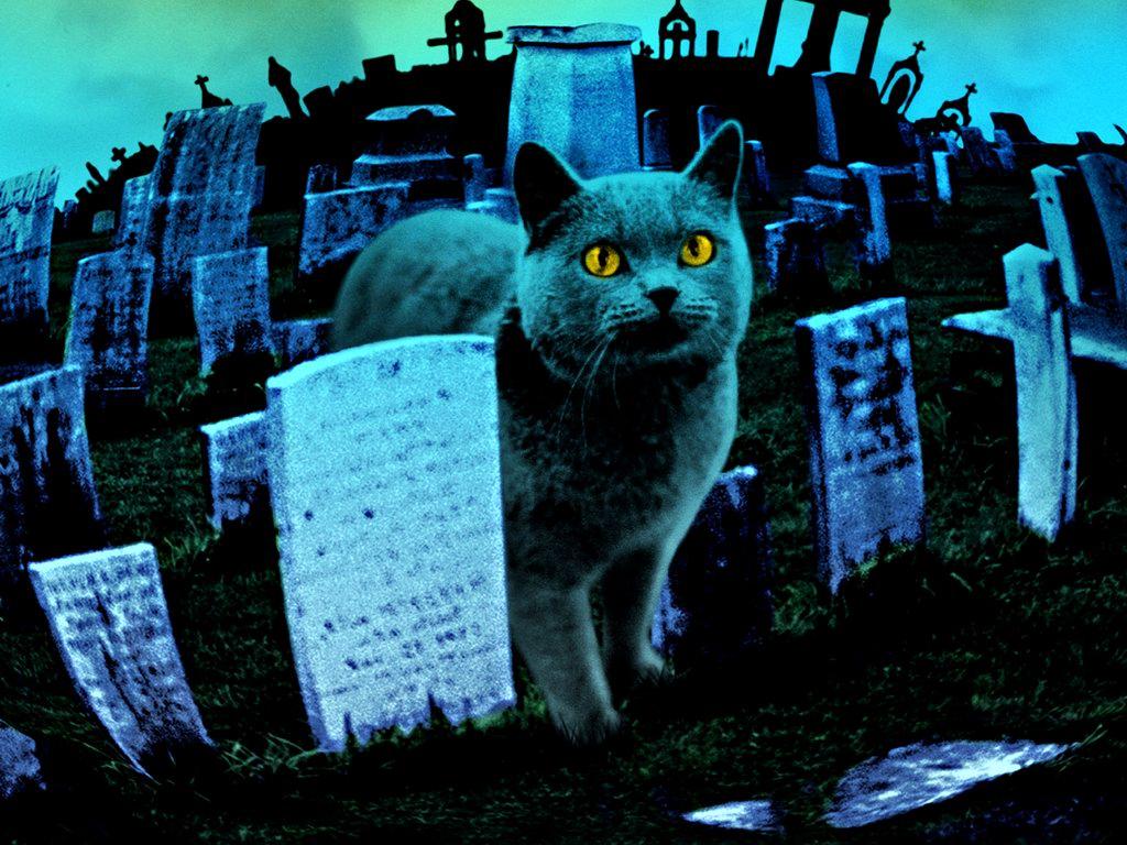 В Череповце должны ликвидировать кладбище домашних животных