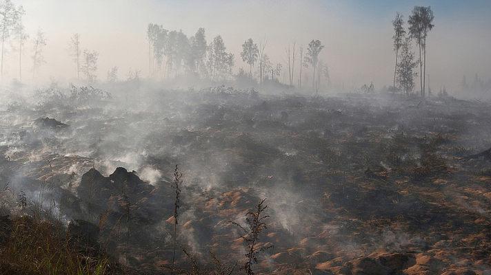 В Вологодском районе горит больше 20 гектаров торфа