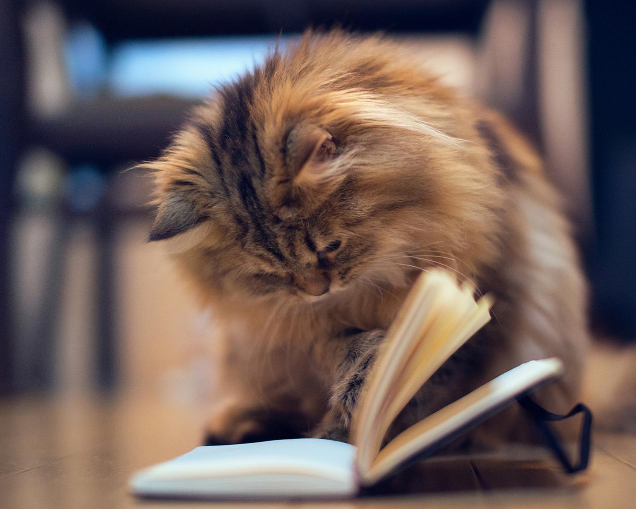 Вологжане будут читать книги с известными людьми