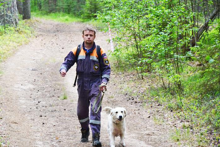 Пропавшие в лесах: за этот сезон заблудились уже 40 вологжан