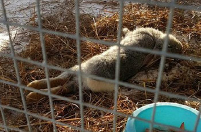 Владелицу контактного зоопарка в Череповце оштрафуют на 30 тысяч рублей