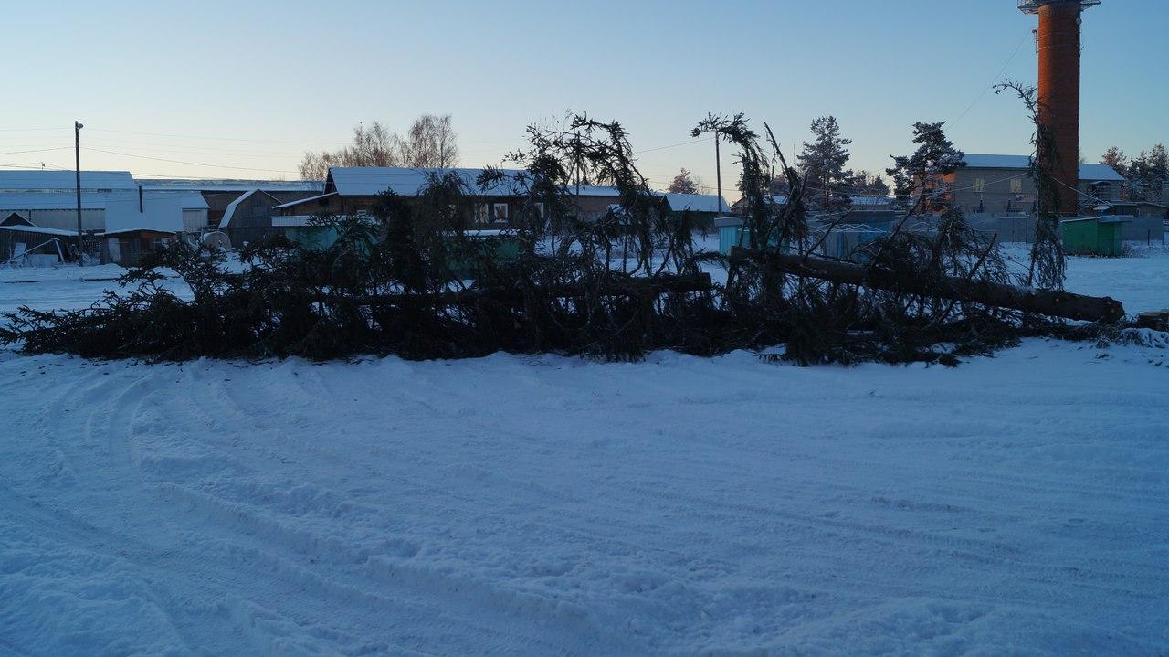 В Бабаево будут заменять «некрасивую» новогоднюю елку