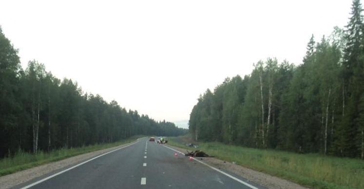 43-летний водитель «Хендая» погиб в ДТП с лосем в Верховажском районе