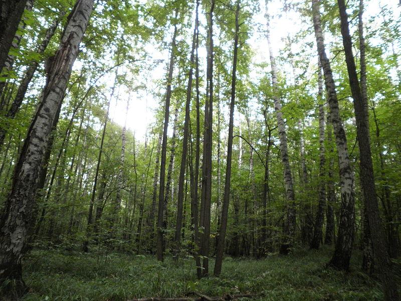 Пропавшая в Вологде 29-летняя девушка была найдена убитой в лесу