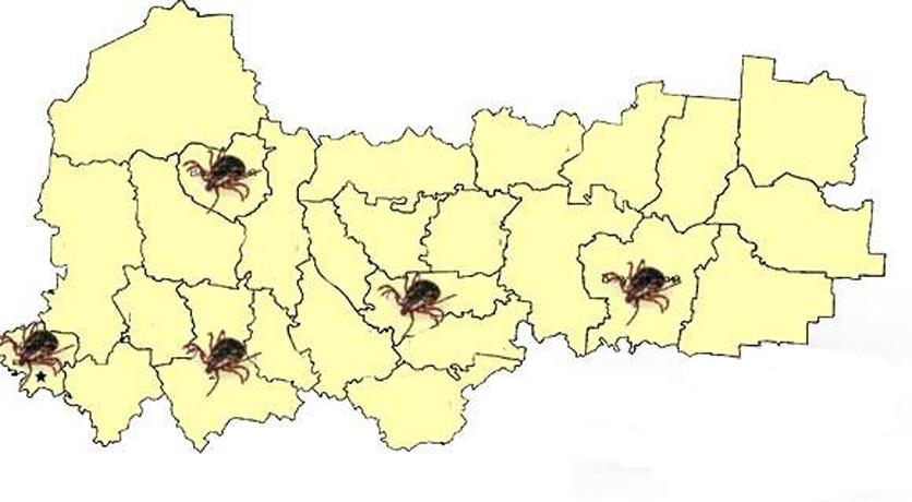 Жителей четырех районов Вологодской области и Череповца атаковали вши