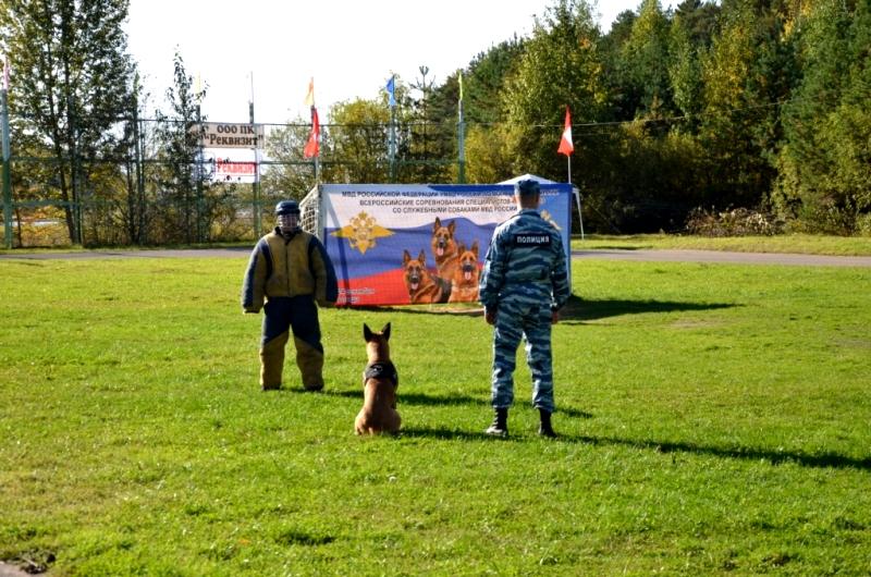 Всероссийские соревнования кинологов проходят в Вологодской области