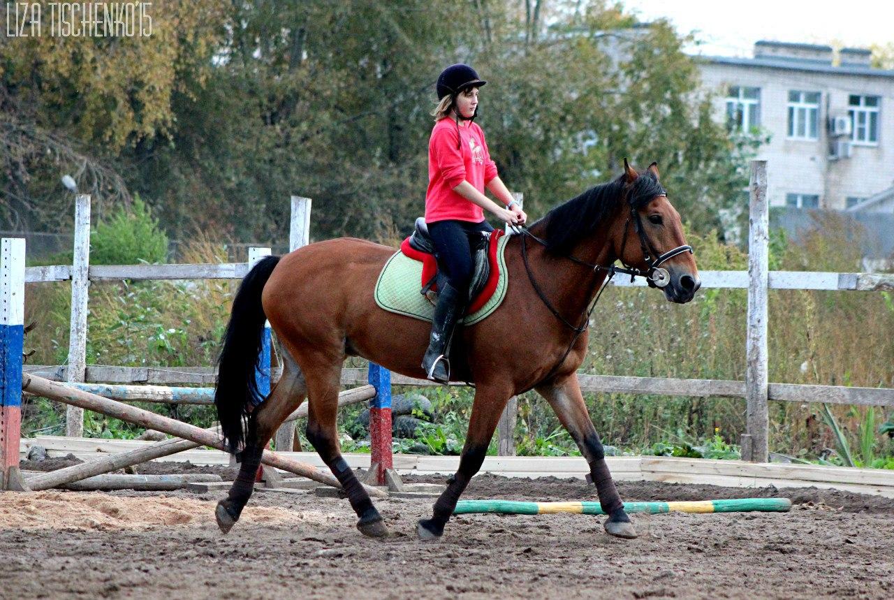 В Вологде расписание автобусов и конный спорт вошли в противоречие