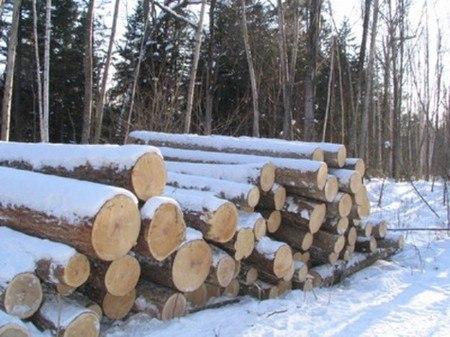В Бабушкинском районе мужчину убило упавшим деревом