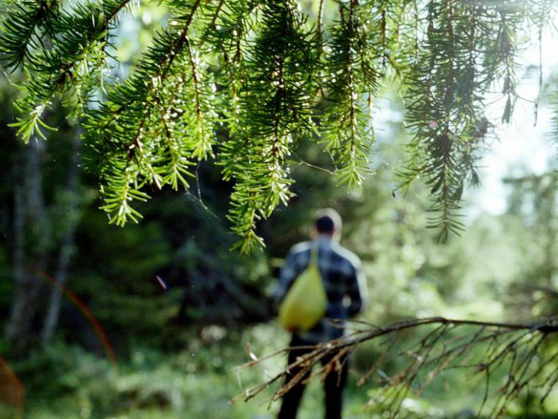 Вологжанин вернулся домой после 9 дней блуждания в лесу