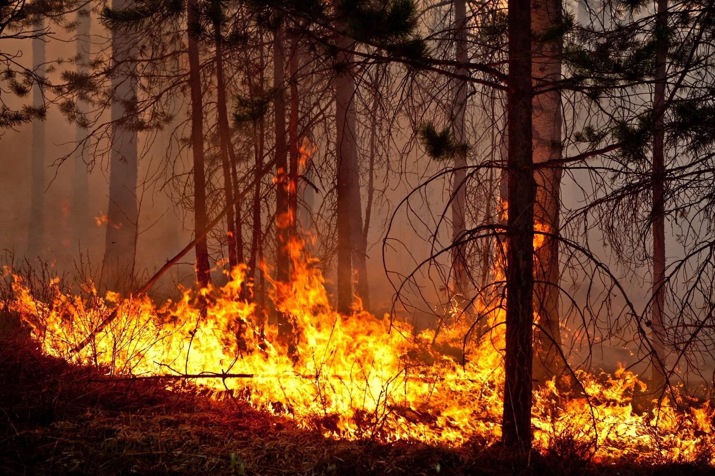 В Вологодской области зафиксированы первые лесные пожары