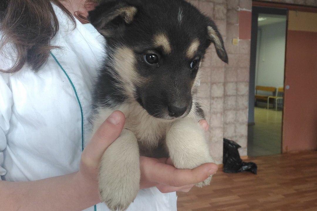В Вологде волонтеры собирают средства на ветеринарный кабинет для бездомных животных