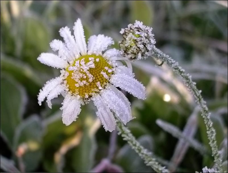 В Вологодскую область пришло похолодание
