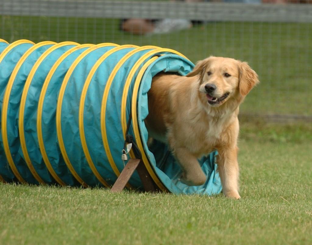 Площадка для выгула собак появится в Вологде в микрорайоне ПЗ