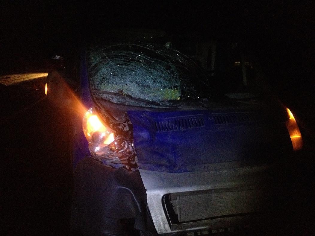 Водитель насмерть сбил двух женщин на трассе в Череповецком районе
