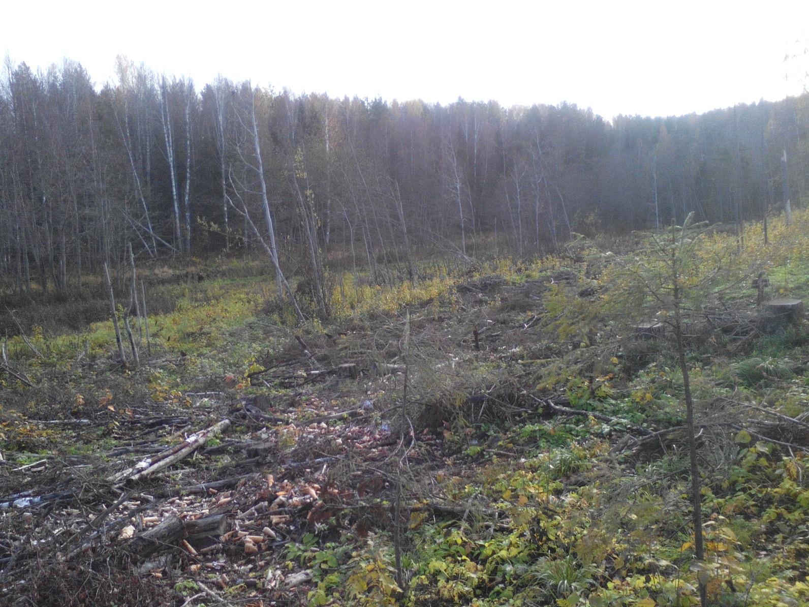 ВУгличском районе нелегально вырубали лес
