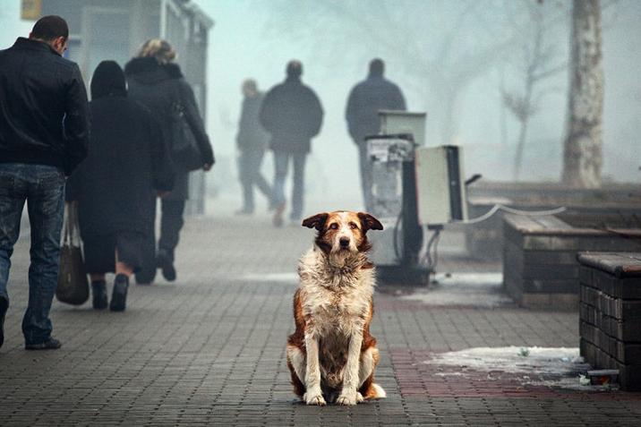 Догхантеры объявили о масштабной акции травли собак, в том числе и в Вологде