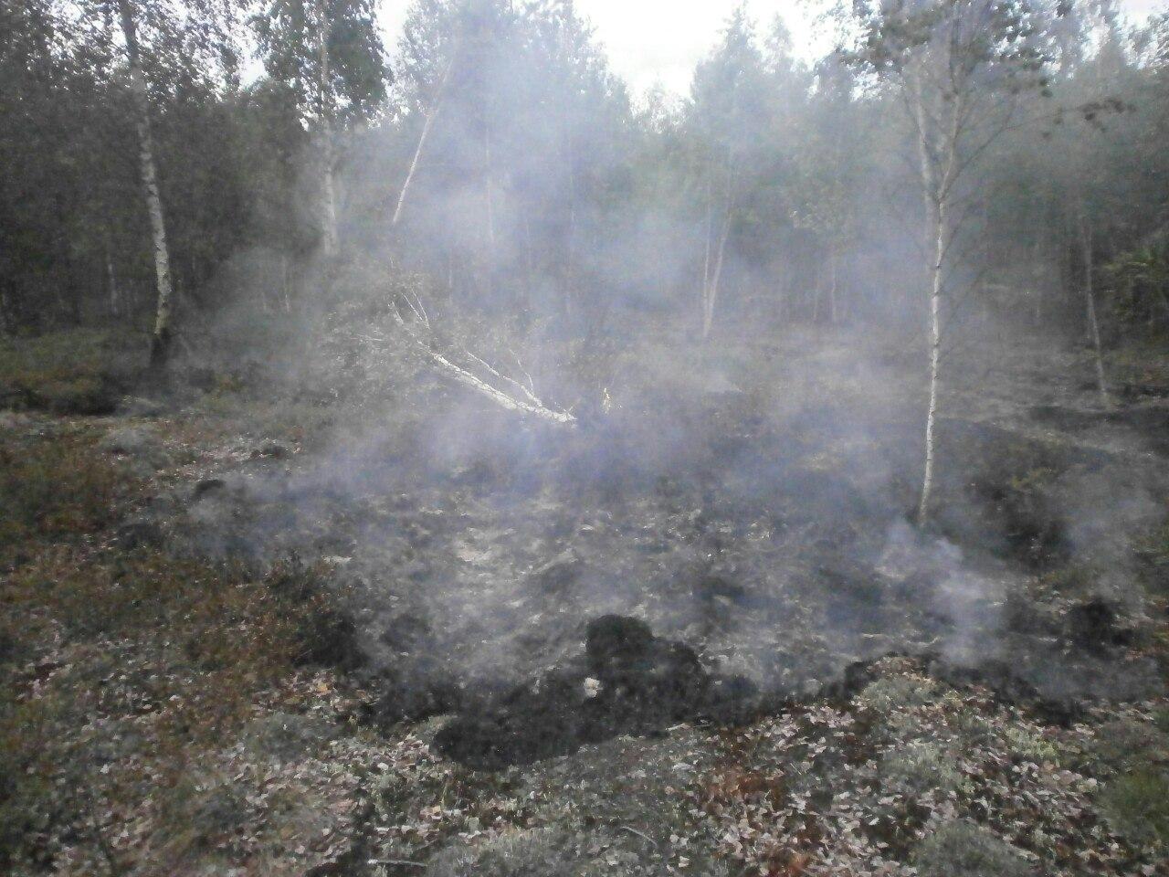 На торфяниках в Вологодском районе обнаружено новое возгорание