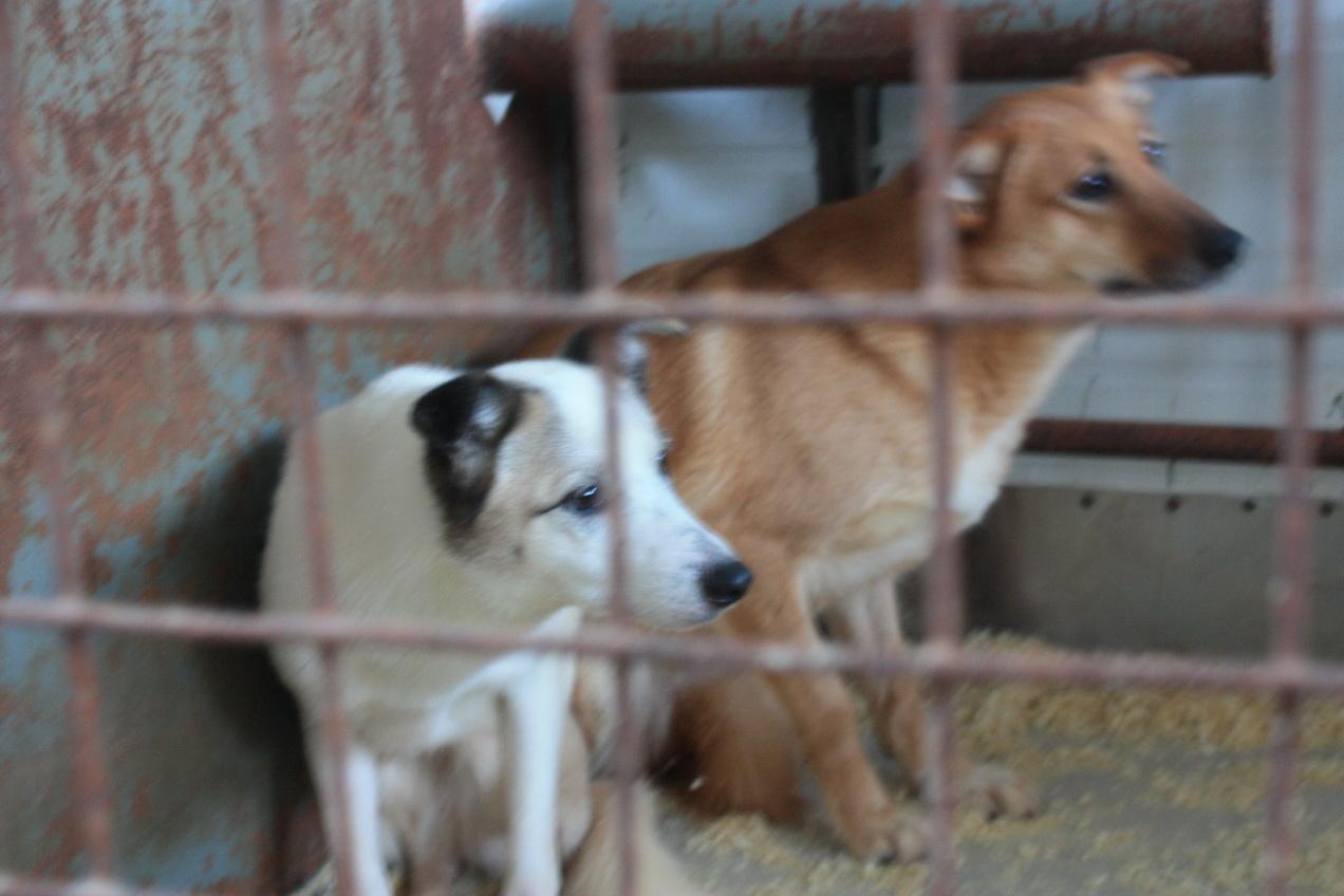 1,9 млн рублей потратили на отлов бродячих собак в Вологде в 2017 году