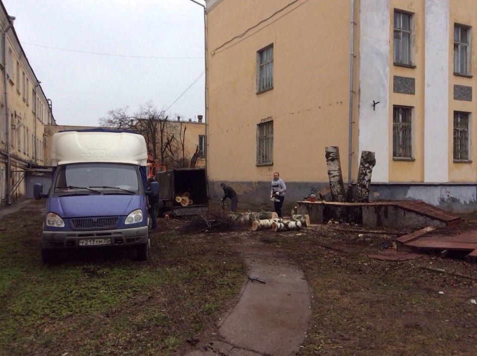 В Вологде спилили березу возле «Треугольного сада» на улице Ленина