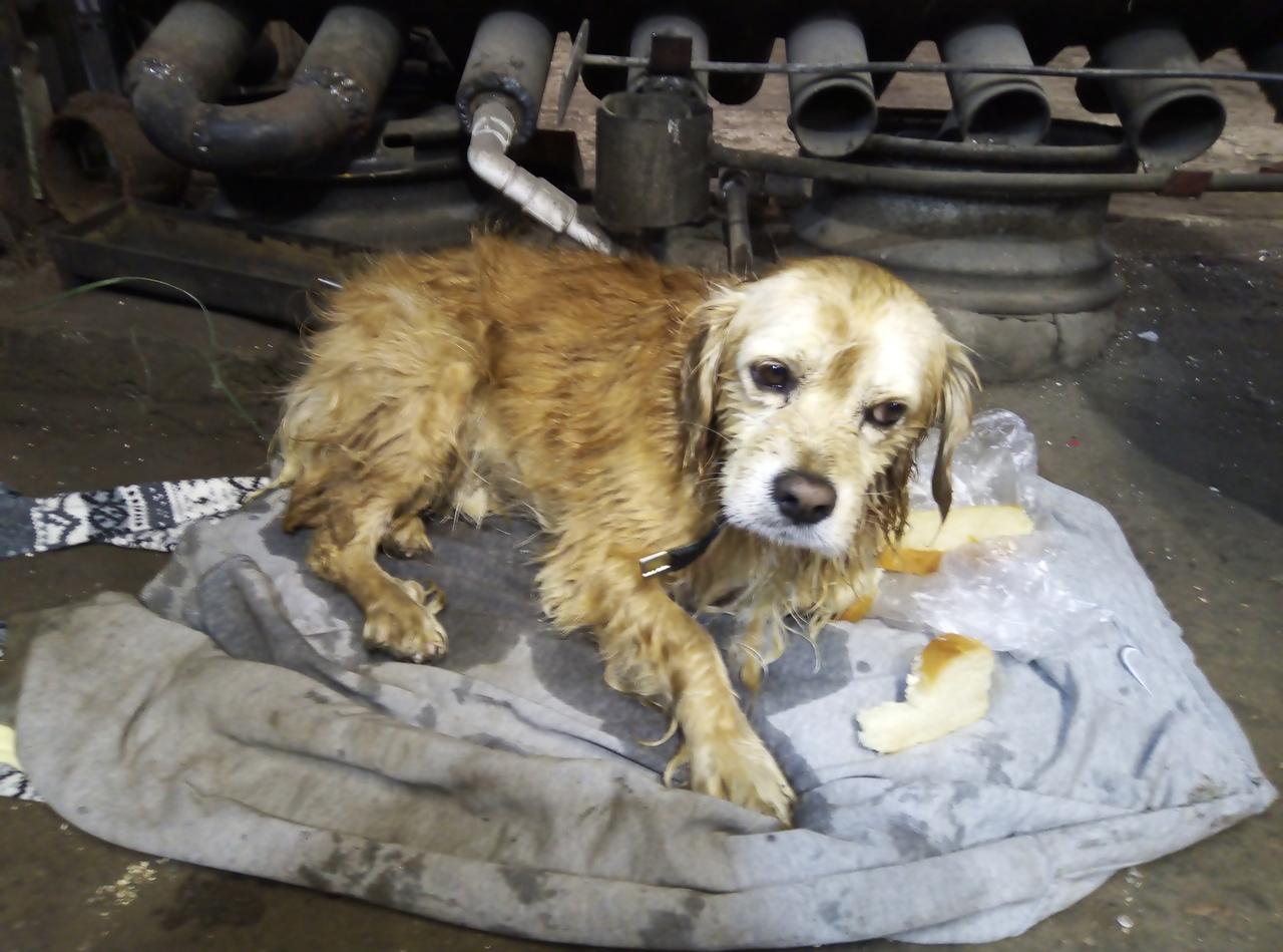 В Вологде работники мотосервиса спасли упавшую в колодец собаку