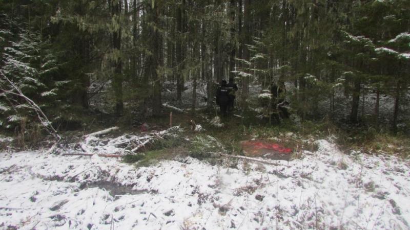 В Никольском районе браконьер застрелил лося и спрятал мясо в реке
