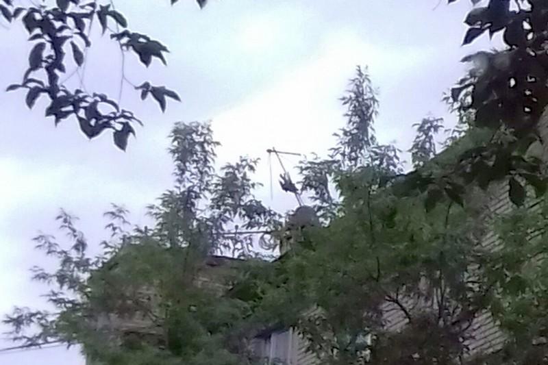 """В Череповце спасателей вызвали из-за трупа вороны, которая """"двигалась"""" из-за ветра"""