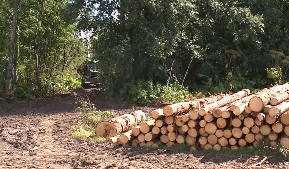 Суд обязал две фирмы выплатить 210 млн рублей за незаконно вырубленный в Череповецком районе лес