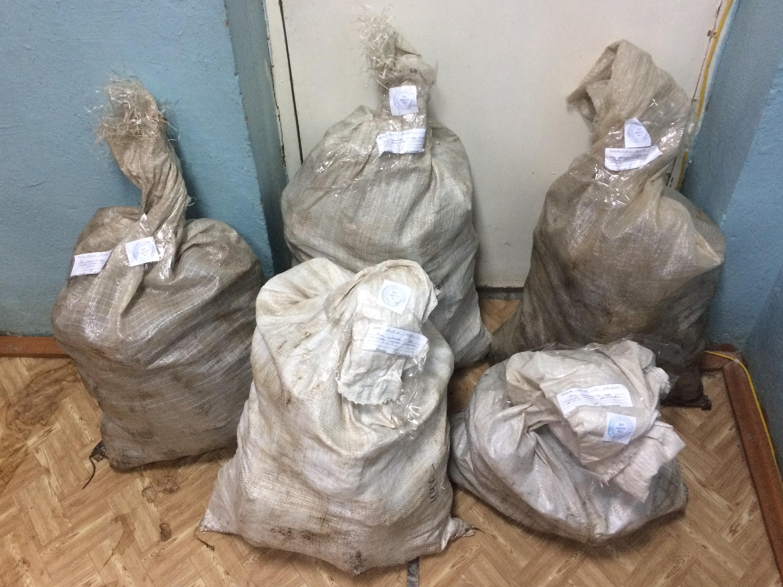Ограбление в очереди за талоном к врачу и продажа ворованной чаги ее хозяйке: курьезы 2018 года в Вологодской области