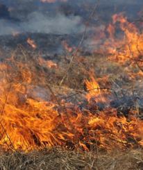 В Вологодской области предлагают затопить торфяники