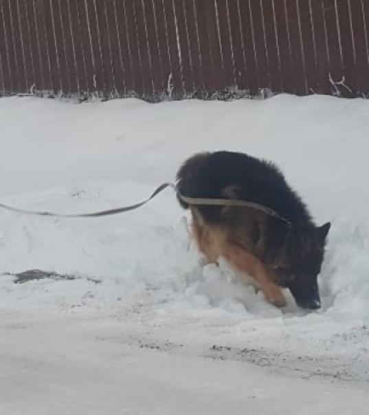 В Череповце служебная собака помогла разыскать пропавшего 7-летнего мальчика