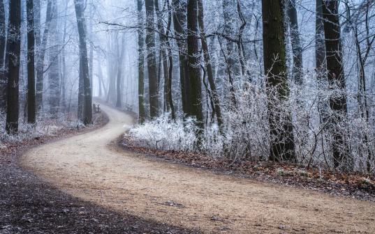 Пропавшую в Вашкинском районе 37-летнюю женщину нашли мертвой в лесу