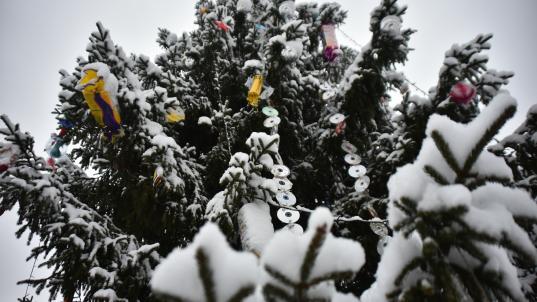 В новогодние праздники на площади Федулова в Вологде будет работать бесплатный Wi-Fi