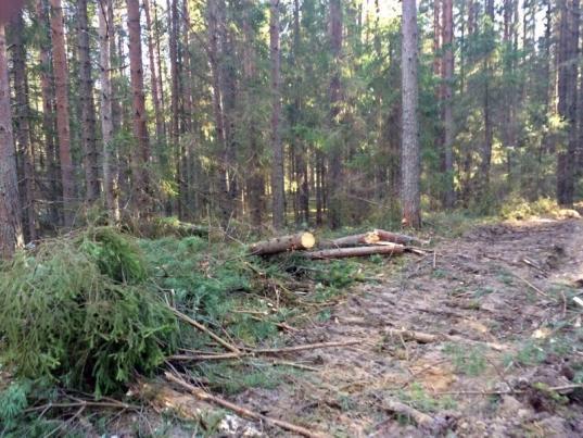 В Вологодской области за 9 месяцев незаконно вырубили леса на 334,8 млн рублей