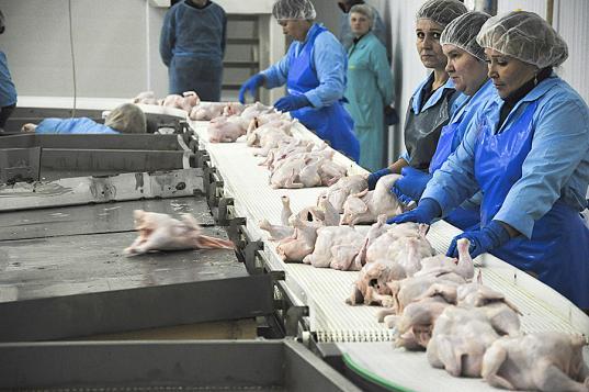 Работники Шекснинской птицефабрики рассказали главе СКР Александру Бастрыкину, что их заставляют увольняться