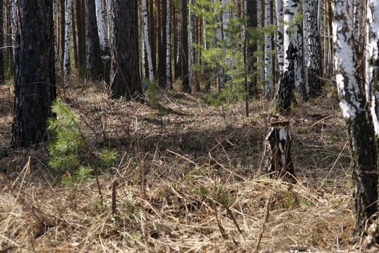 В лесу в Вологодском районе нашли тело 53-летнего Юрия Житова, пропавшего в 2017 году