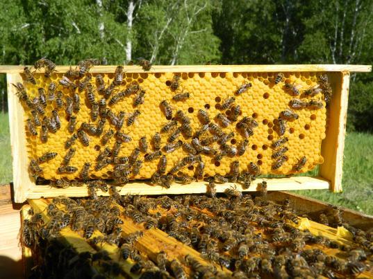 Cеминары и курсы для пчеловодов будут проводить в Вологодской молочно-хозяйственной академии