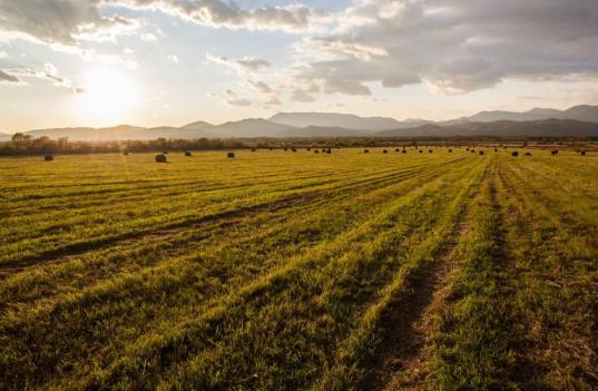 Пустующие земли сельхозназначения будут раздавать бесплатно в трех районах Вологодской области