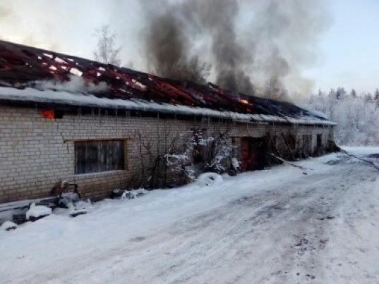 Пять свиней и шесть кур погибли на пожаре в Харовске