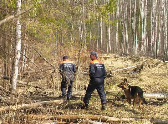 В Великоустюгском районе в лесу нашли тело 63-летнего охотника