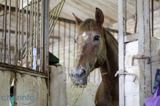 В Череповце ищут инвесторов на строительство конно-спортивного комплекса