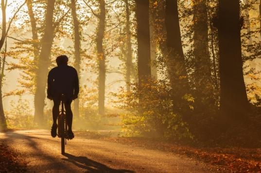В Череповецком районе велосипедист заблудился в лесу