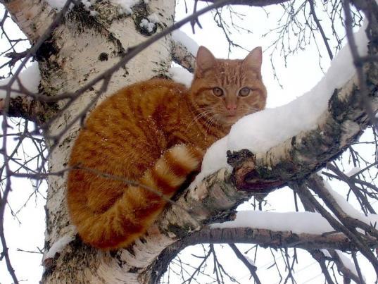 Спасателям пришлось помогать череповчанину, который полез за деньги снимать с дерева кошку